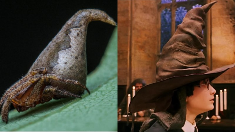 Meet the 10 new species discovered by scientists on 2017 - Harry Potter hat animal cover image