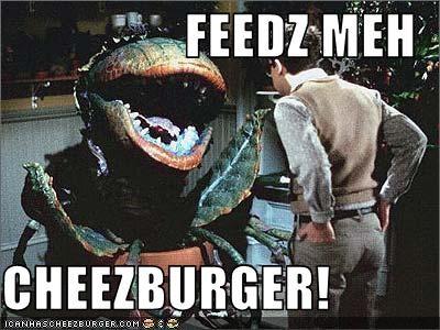 Cheezburger Image 2261337856