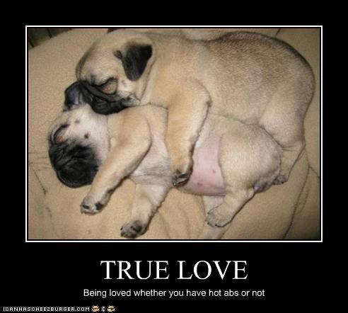 belly cuddling love pug puppies tummy - 2261890816