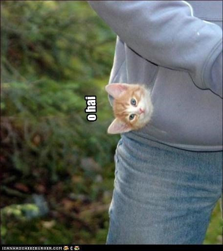 cute,kitten,o hai,pocket