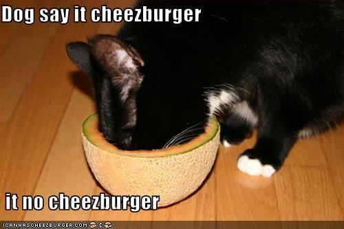 Cheezburger Image 2263058176