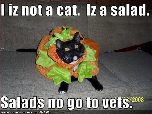 costume,lies,plotting,salad,sneaky,vet