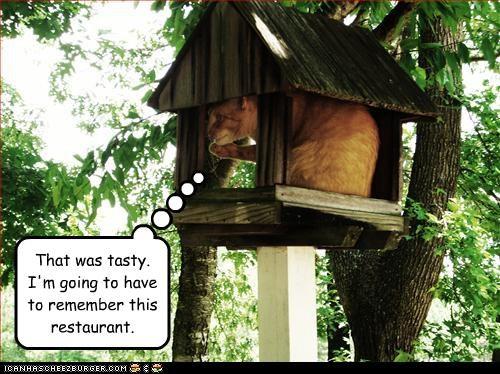 birdhouse,murder,nom nom nom,restaurant