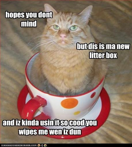 hopes you dont mind but dis is ma new litter box and iz kinda usin it so cood you wipes me wen iz dun