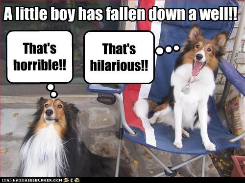 boy fall horrible lassie little sheltie well