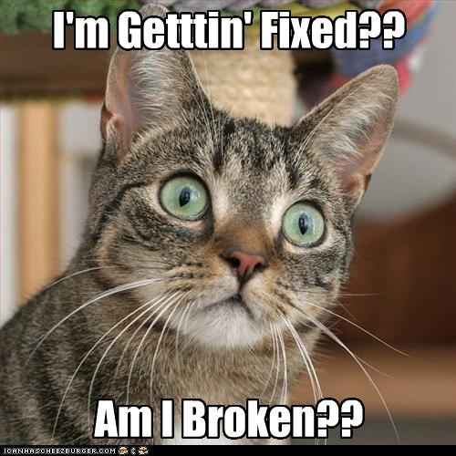 Image result for cat im getting fixed am i broken meme
