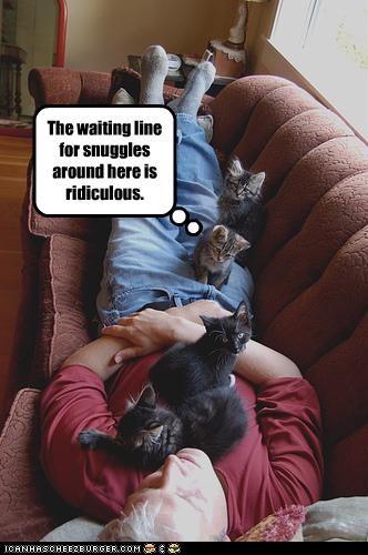 cute kitten snuggles waiting - 2267641600