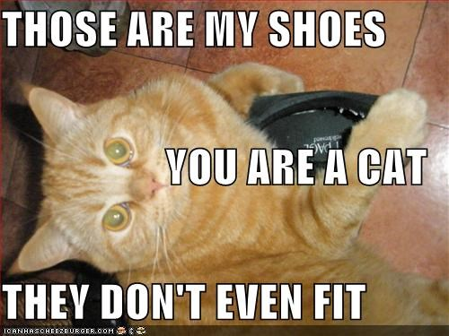 You Are A Cat They Don T Even Fit