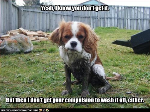cavalier king charles spaniel,dirty,mud,paws
