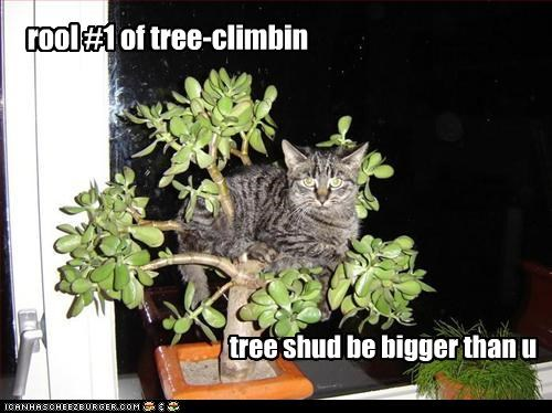 climbing,rules,tree