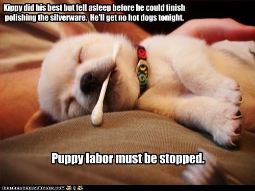 Kippy did his best but fell asleep before he could finish polishing the silverware. He'll get no hot dogs tonight. Puppy labor must be stopped.