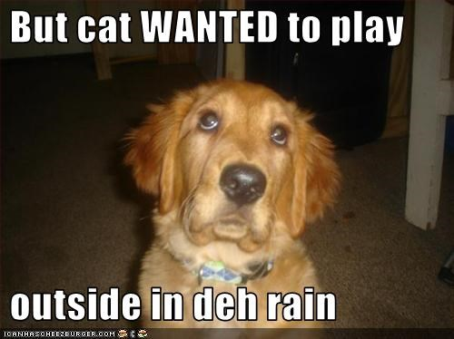 golden retriever,lolcats,outside,play,rain