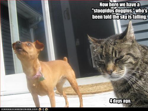 chihuahua FAIL fall kitteh lolcats sky stupid - 2272677120