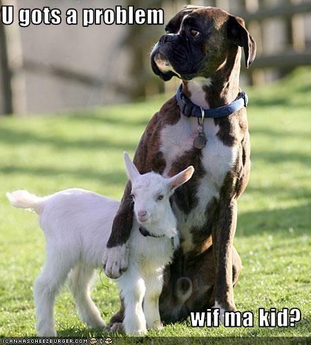 boxer goats kids problem - 2275179264