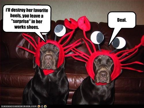 costume,crab,destroy,humiliation,labrador,revenge,shoes