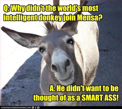 Q: Why didn't the world's most intelligent donkey join Mensa