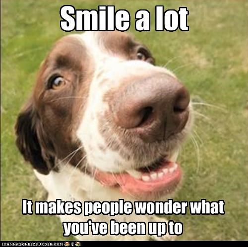 smile,springer spaniel,wonder