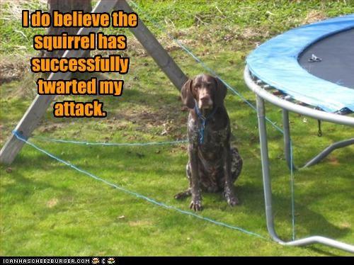attack pointer squirrels success - 2279246592