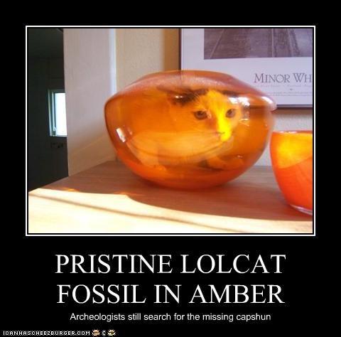 PRISTINE LOLCAT FOSSIL IN AMBER