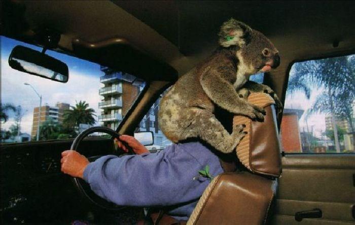 21 Photos of wild life animals in Australia