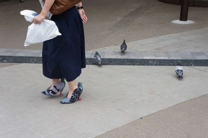 Woman in Japan walking with pigeon style shoes alongside real pigeons.