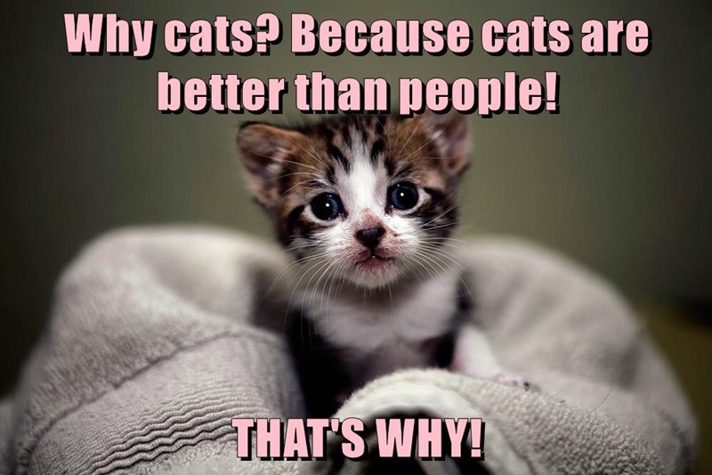 Top ten memes - last week of May 2017 - cover kitten meme about why cats are better than people.