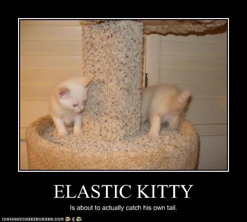 ELASTIC KITTY Is about to actually catch his own tail.