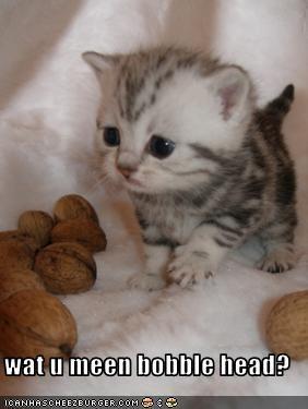 Cheezburger Image 2289162496