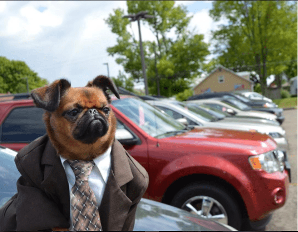 meet Mr. Griffin, the dog who sells used cars