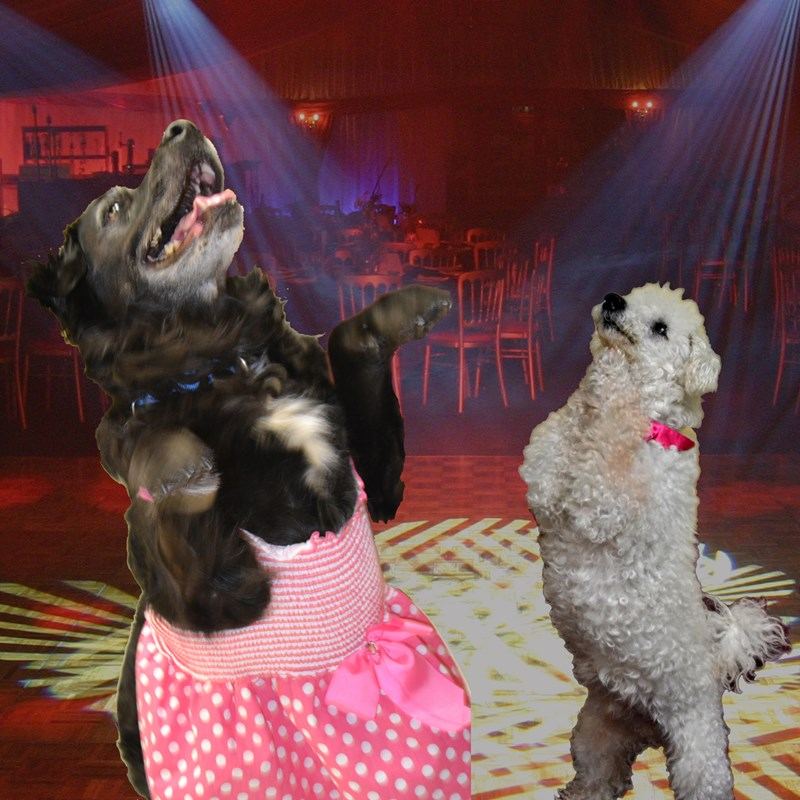 The final contenders of senior dogs prom contest