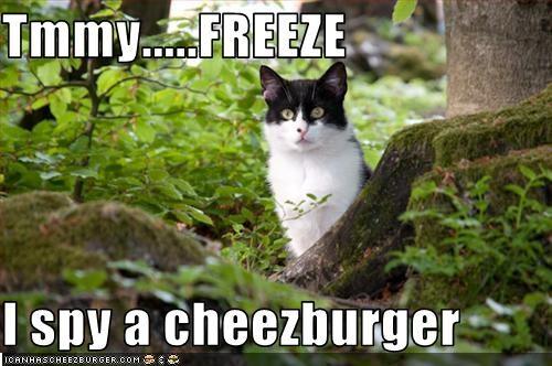 Cheezburger Image 2290086144