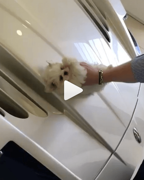 A story of an instagram account that posts rich kids getting away with anything - backlash over a video of a guy cleaning his car with a small puppy