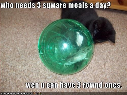 ball cute kitten lolhamsters nom nom nom want - 2290511104