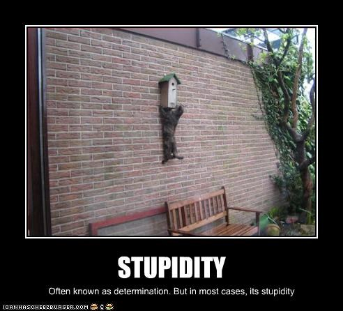 STUPIDITY Often known as determination. But in most cases, its stupidity