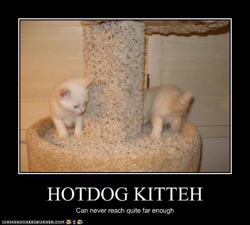 HOTDOG KITTEH Can never reach quite far enough