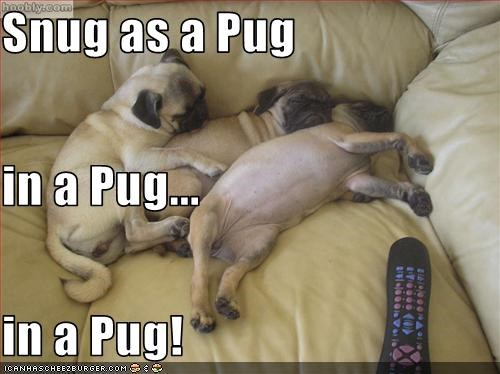 couch cuddles dogpile pug puppies sleeping snug