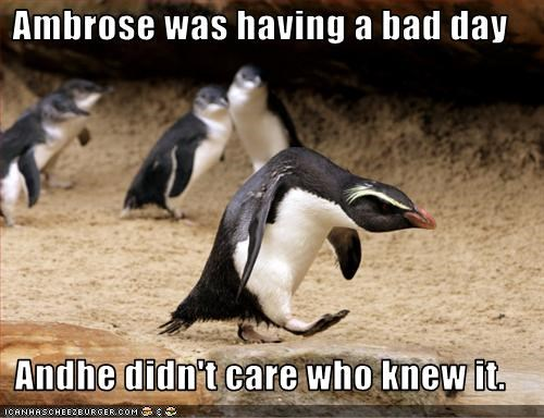 lolpenguins,mad,upset