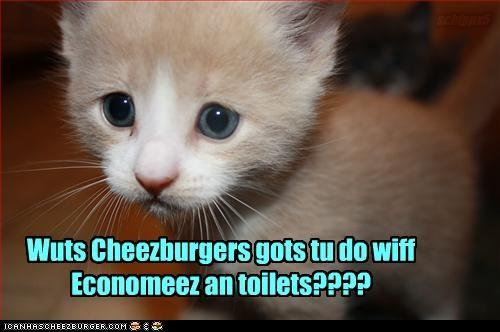 Cheezburger Image 2293344512