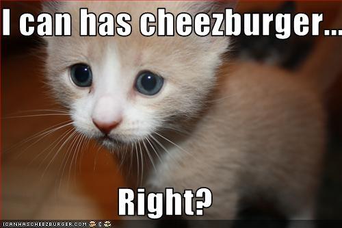 Cheezburger Image 2293387008