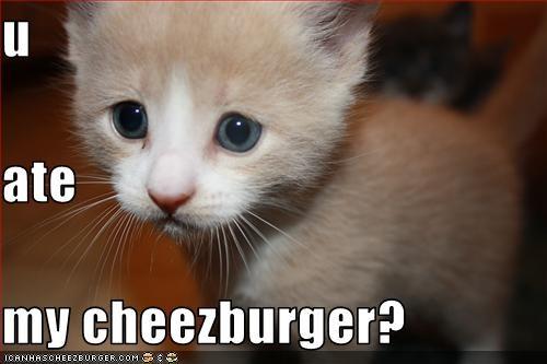 Cheezburger Image 2293569792
