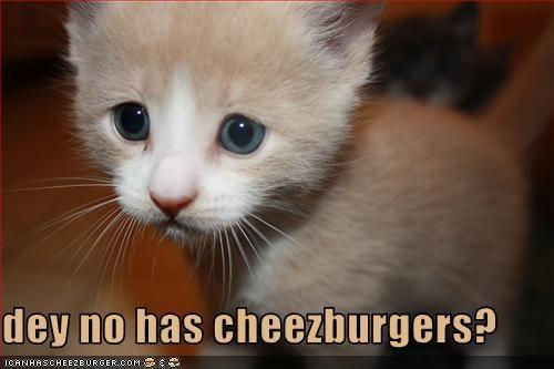 Cheezburger Image 2293627136