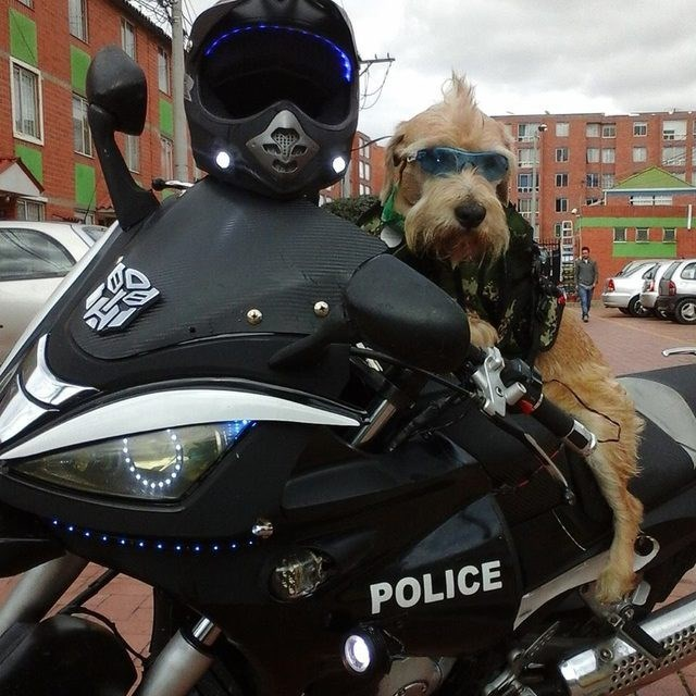 important jobs dogs do around the world