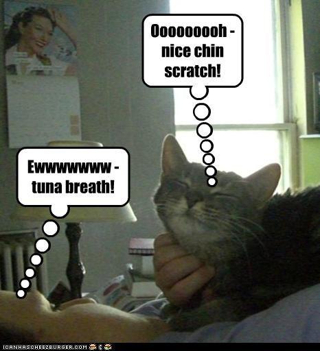 Ooooooooh - nice chin scratch!