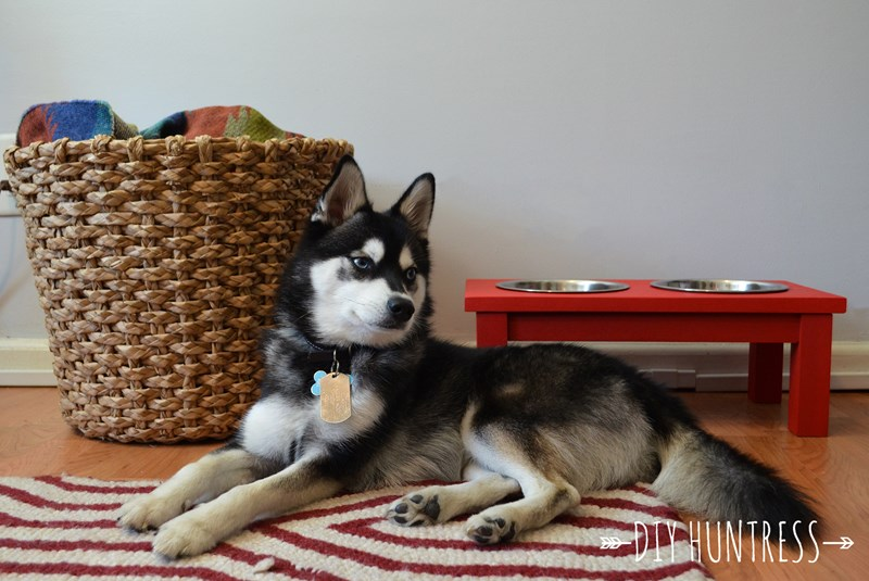 husky next to his food bowls - A step by step guide to making a elevated dog food bowls