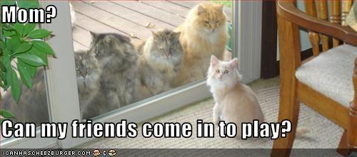 friends momcat playing - 2295133440