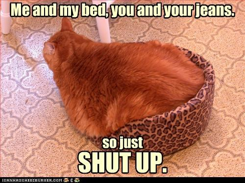cat bed fat nap - 2296134912