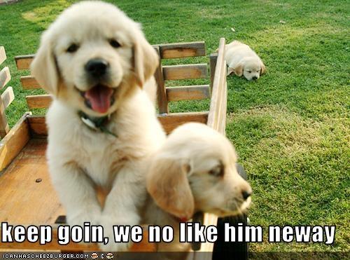 labrador left like puppies riding wagon - 2296887040