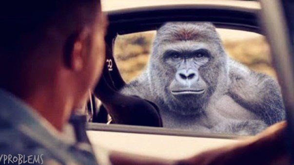 Harambe prepares you for these Tuesday memes. Funny memes about holidays, friendship, money, jesus, Harambe, school, dating, relationships, porn.