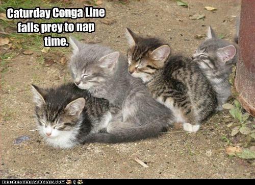 Caturday cute dancing kitten nap - 2297884416