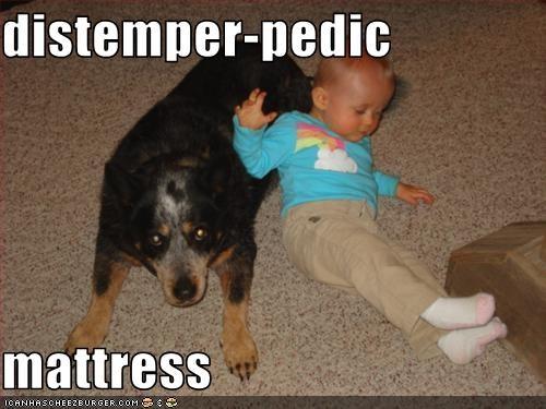 distemper-pedic  mattress